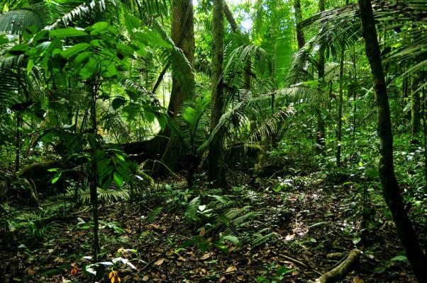 Peugeot-Regenwaldprojekt in Brasilien wird Naturschutzgebiet