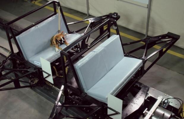Sicherheit für Tiere im Auto -  Crashtest mit Bello