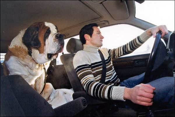 Den Vierbeiner richtig im Auto verstauen